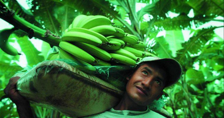 Ci sono banane buone… … e ci sono banane migliori!