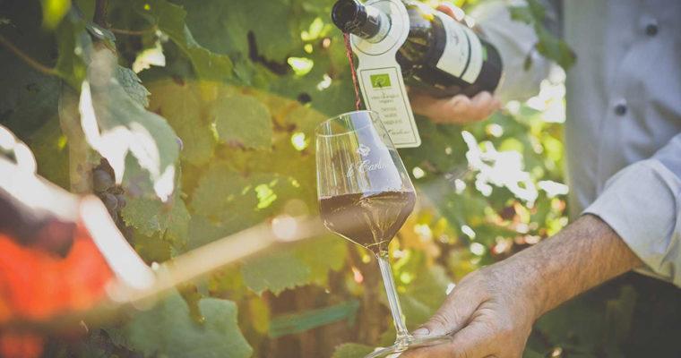 Maggio: mese del vino bio