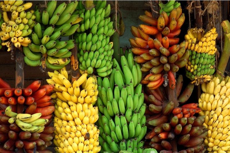 Tornano le banane..