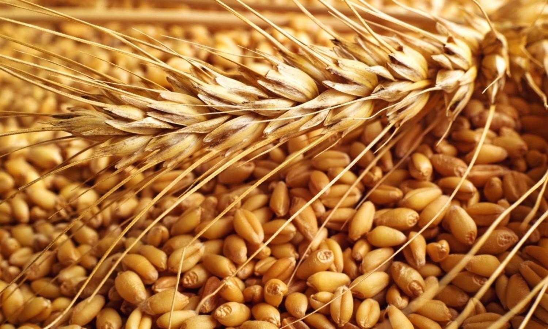 Ottobre: cereali antichi a filiera corta